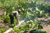 Ghana reforestation news thumb