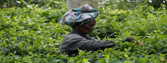Webinar Responsible Business Conduct & Sri Lanka: Making your Agro-Food business future proof