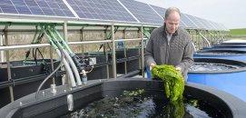 Farmer with solar panels