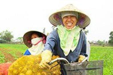 Vietnamese potato farmers