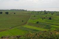 Development of Kunzila improves food security in Ethiopia